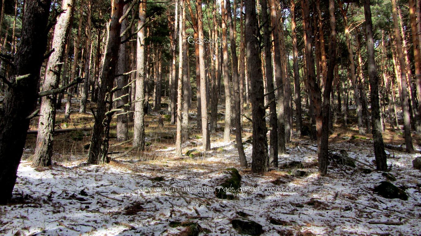 Ruta por las chorreras de San Blas en la zona de la Najarra de Miraflores de la Sierra 21